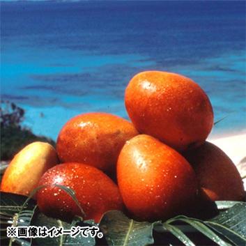 <沖縄県産>マンゴー(3~6玉)1.5kg