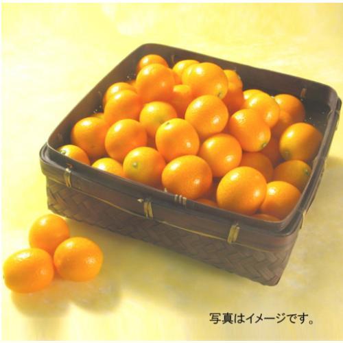 <宮崎県産>完熟金柑「たまたま」 1kg