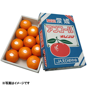 <愛媛県産>アンコールオレンジ 2kg