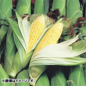<北海道産>とうもろこし サニーショコラ(10本)計3.5kg