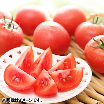 <北海道・下川美深町産>フルーツトマト「はるかエイト」(8~12玉)計800g
