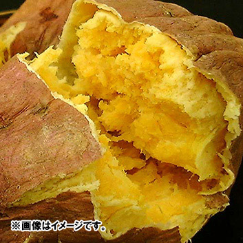 <鹿児島県産>向井さんの安納紅芋【無選別】 5kg