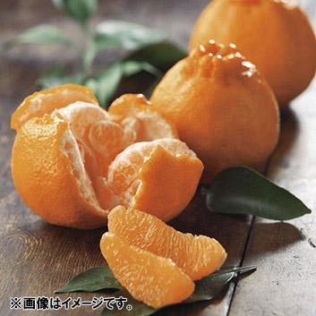 <熊本県>葉付不知火3kg