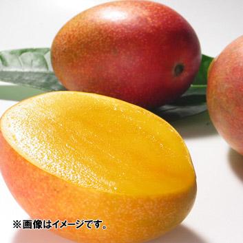 <宮古島産>倫果樹園アップルマンゴー 良品(2~3玉)700g