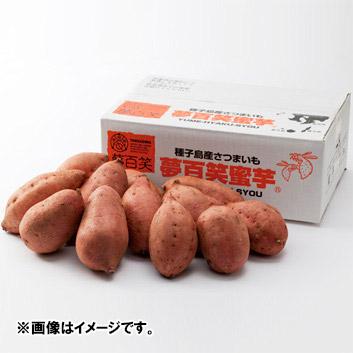 <夢百笑>種子島蜜芋 3kg