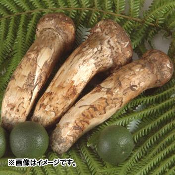 国産 松茸 約90g(2~4本) すだち3個