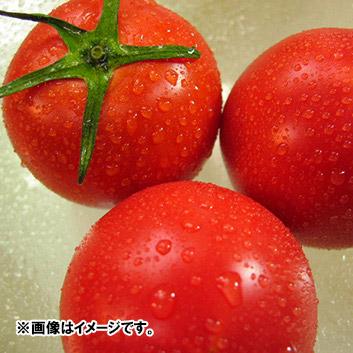<高知県産>別格徳谷トマト 1kg