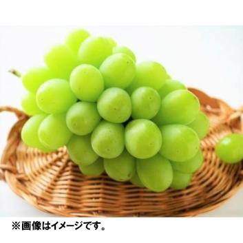 <丸松農園>山形県産大粒ぶどう「シャインマスカット」計1.4kg(2~3房入り)