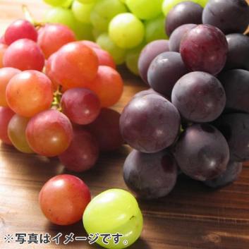 <山梨県・福寿園>おすすめぶどう3種詰合せ(5~6房3kg)