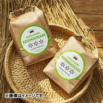 【新米】長野県産 コシヒカリ  サカエブレンド 千曲リバーサイド8kg