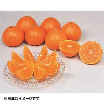 愛媛県 紅まどんな 1.2kg